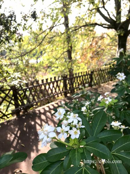 フランスの公園で散歩_d0235162_07133355.jpg