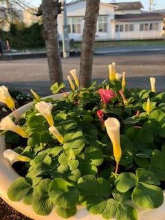 板野生活 ~秋のはるかぜガーデン~_c0218368_10075934.jpg