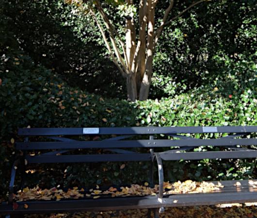 セントラルパークの庭園で見かけた、紅葉を楽しむ特等席_b0007805_07282901.jpg