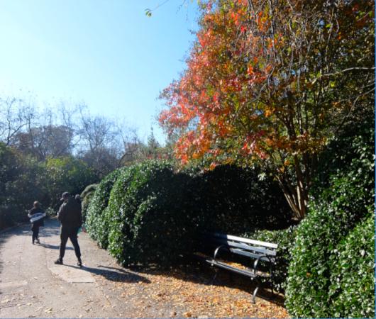 セントラルパークの庭園で見かけた、紅葉を楽しむ特等席_b0007805_07285871.jpg