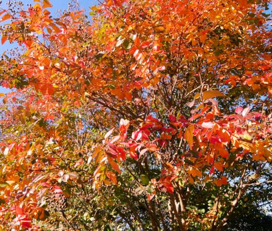 セントラルパークの庭園で見かけた、紅葉を楽しむ特等席_b0007805_07294068.jpg