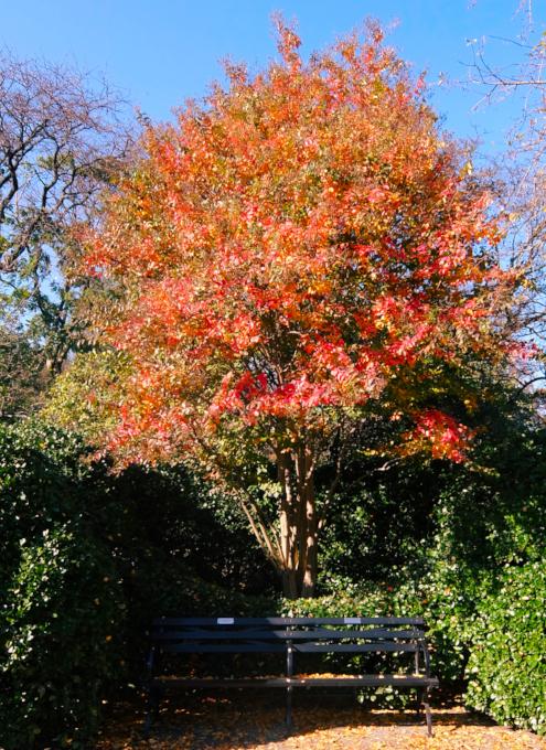 セントラルパークの庭園で見かけた、紅葉を楽しむ特等席_b0007805_07301301.jpg