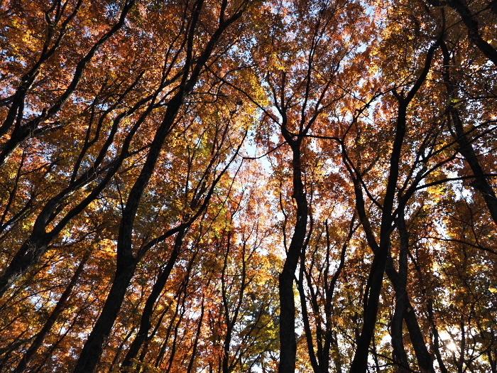 続・裏山紅葉散歩_c0110112_22424056.jpg
