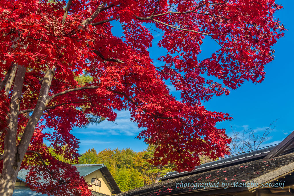 久しぶりに昭和記念公園へ_b0010915_19493318.jpg
