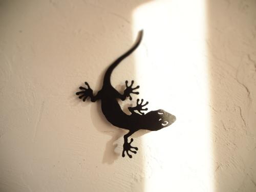 noie Gecko 2020_c0148232_16181707.jpg