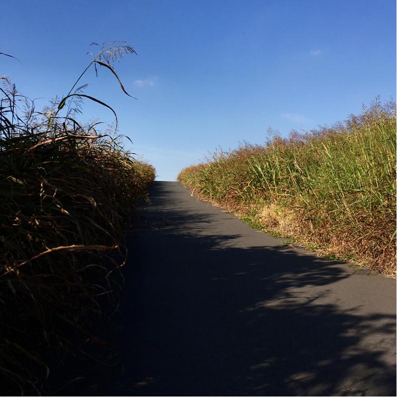 隅田川を全部歩いた_c0060143_00083698.jpg