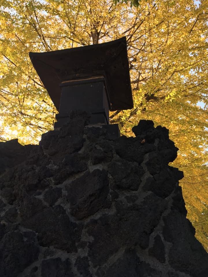 銀杏が色づく、宮城氷川神社の富士塚を訪問_c0060143_22470982.jpg