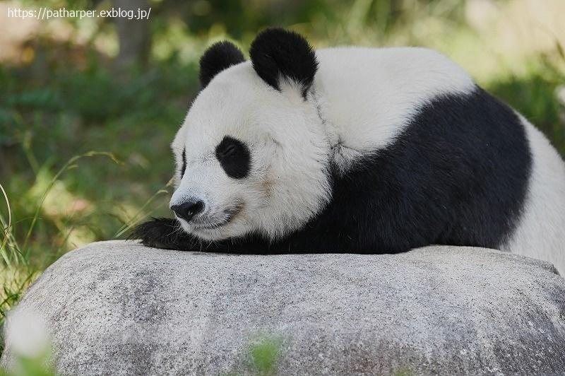 2020年10月 王子動物園3 その1_a0052986_07274086.jpg