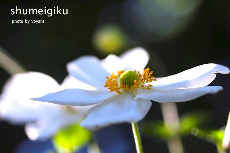 10月の庭_d0316986_23325337.jpg