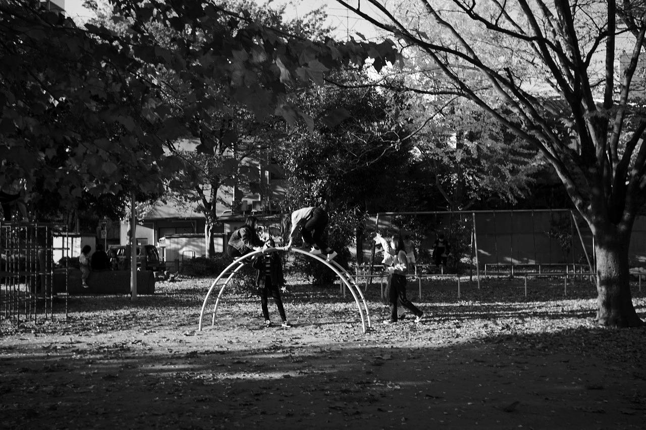 銀杏の公園で「シャッターを押してもらえませんか?」 20201118_c0082800_22140428.jpg