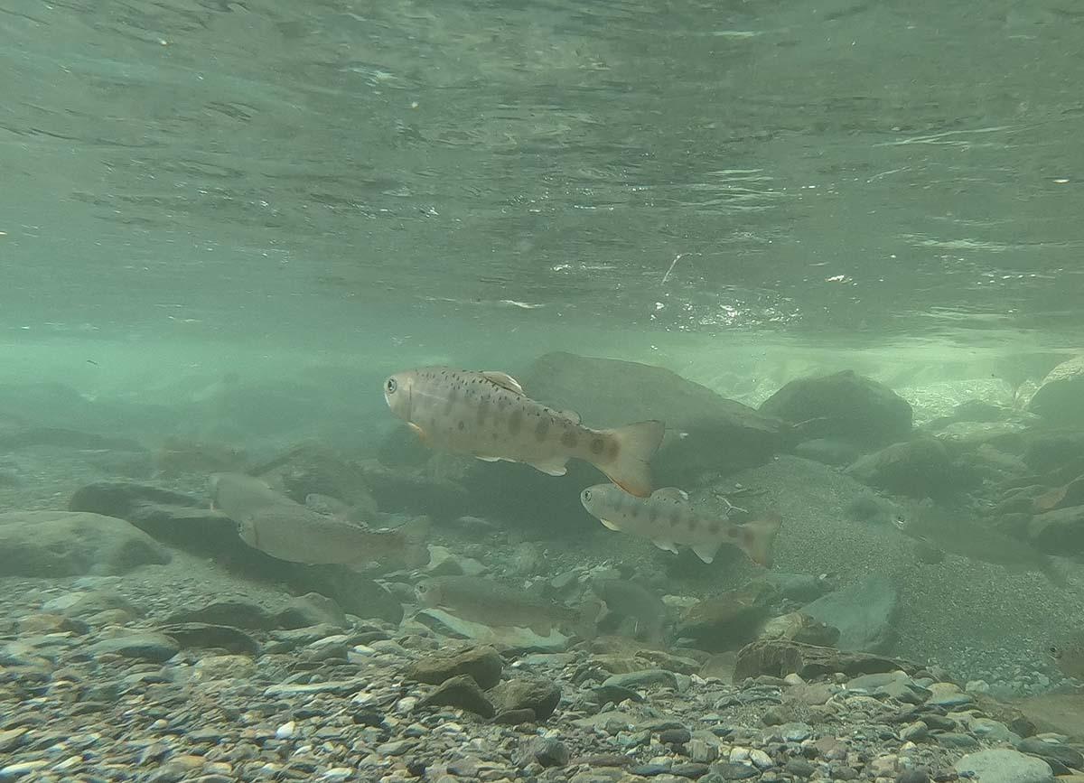 水中動画解析_c0095801_17093589.jpg