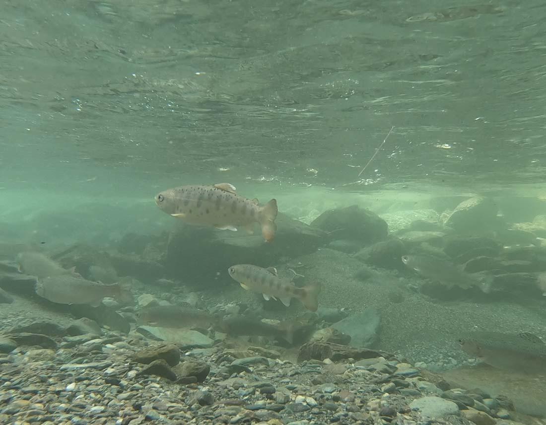 水中動画解析_c0095801_17101672.jpg