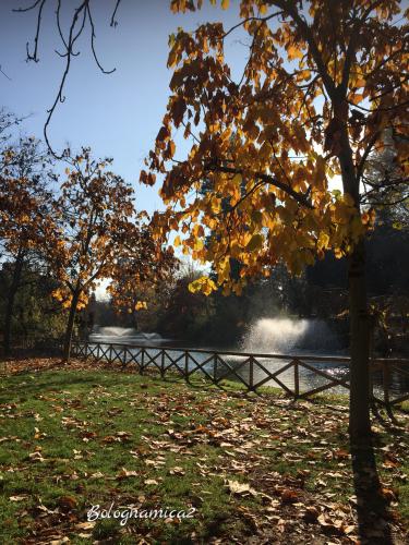 公園の紅葉_b0338818_23170168.jpeg