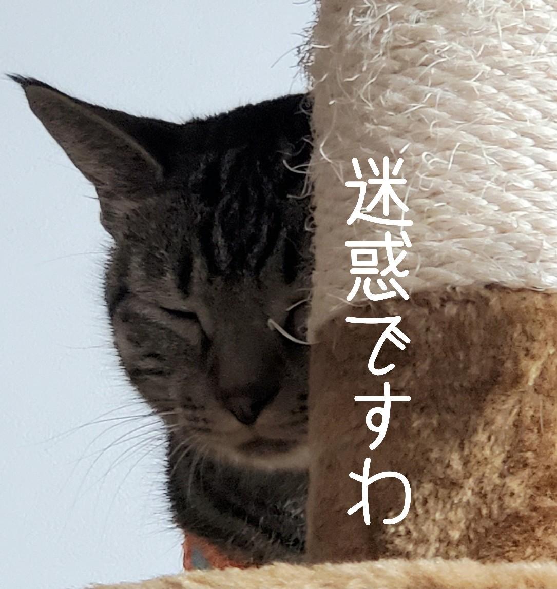 やきもちたまちゃん_e0338831_11301963.jpg