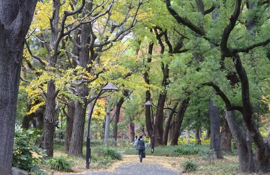 日比谷公園_f0059673_18494820.jpg