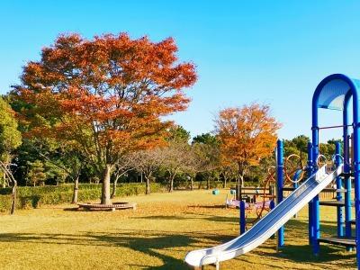 富浜緑地 秋の紅葉の紹介R2.11.13_d0338682_16422062.jpg