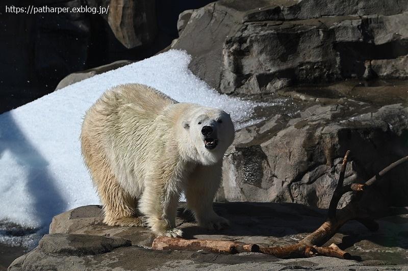 2020年10月 王子動物園4 その1 秘密のハロウィン_a0052986_07452630.jpg