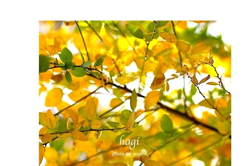色づき始めた11月の庭_d0316986_12542463.jpg