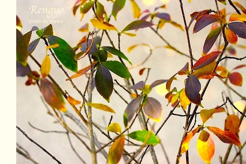 色づき始めた11月の庭_d0316986_12543709.jpg