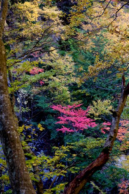 山田温泉のライダーハウス_f0179404_17595884.jpg