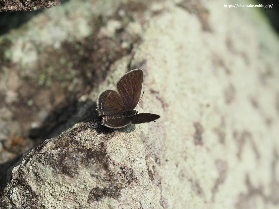 紀州の蝶を訪ねて 2020_c0189013_16115681.jpg