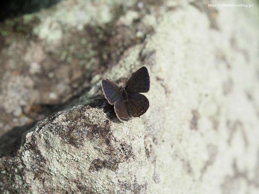 紀州の蝶を訪ねて 2020_c0189013_16155798.jpg