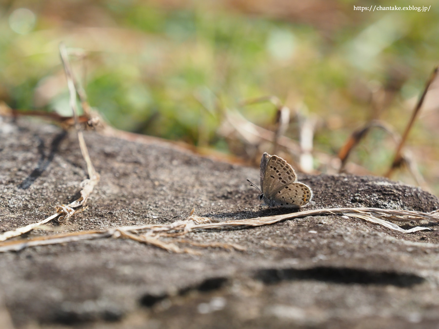 紀州の蝶を訪ねて 2020_c0189013_16284560.jpg