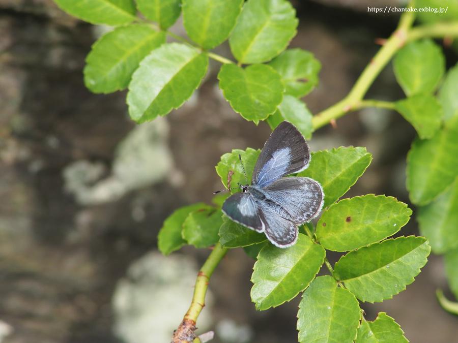 紀州の蝶を訪ねて 2020_c0189013_16432422.jpg