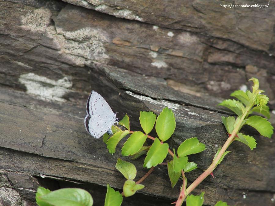 紀州の蝶を訪ねて 2020_c0189013_16482565.jpg