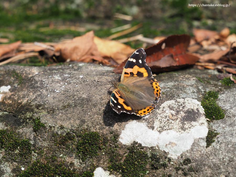 紀州の蝶を訪ねて 2020_c0189013_16584656.jpg