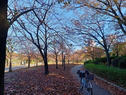 あっという間に秋は過ぎる?_d0041427_22313359.jpg