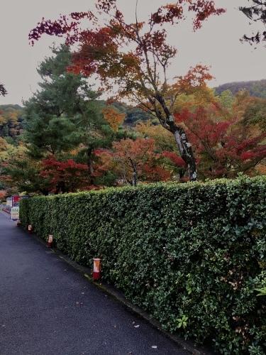 紅葉の嵐山_a0197730_14094154.jpeg