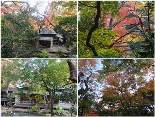 2泊3日のバス旅行で箱根・伊豆へ(その2)_d0037233_10141994.jpg
