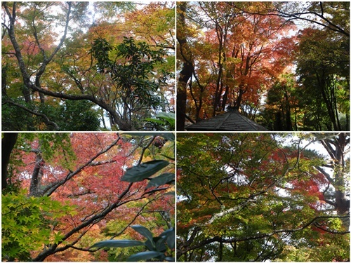 2泊3日のバス旅行で箱根・伊豆へ(その2)_d0037233_10142825.jpg
