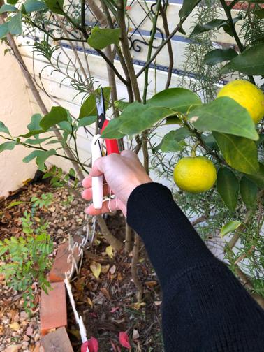 秋のお庭から♪今年は柚子が収穫できそうです_f0023333_22190027.jpg