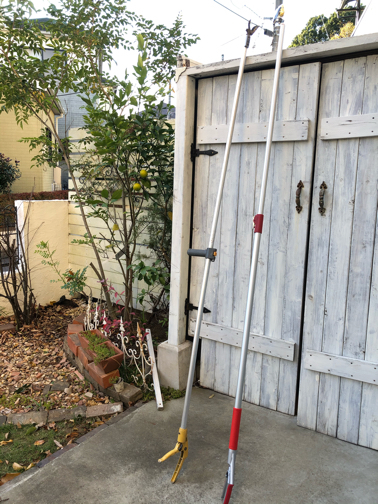 秋のお庭から♪今年は柚子が収穫できそうです_f0023333_22204423.jpg