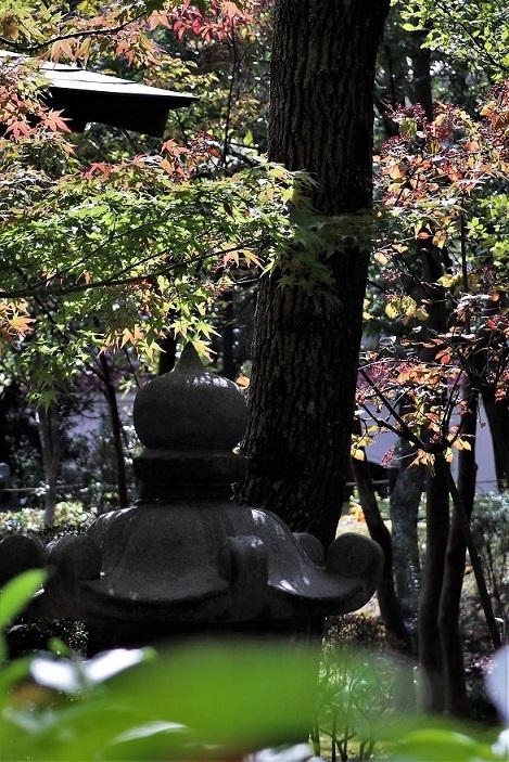 秋、しあわせの村_a0143839_16061057.jpg
