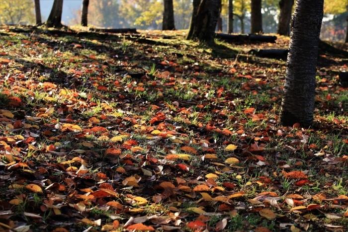 秋、しあわせの村_a0143839_17020690.jpg