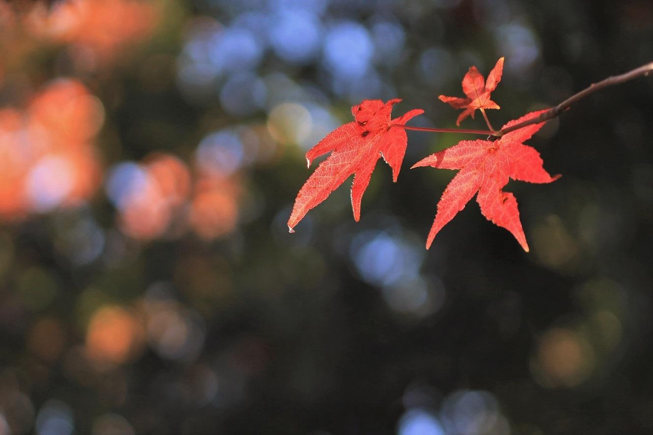 秋、しあわせの村_a0143839_17021107.jpg