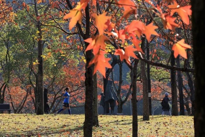 秋、しあわせの村_a0143839_17021457.jpg