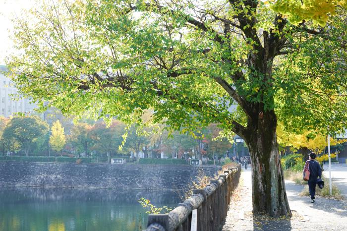 大阪の秋_e0353441_21412643.jpg