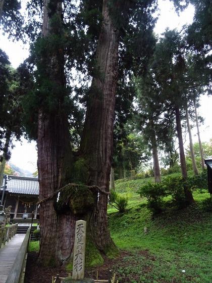 栢野の大杉と草だんご_b0299042_20182708.jpg