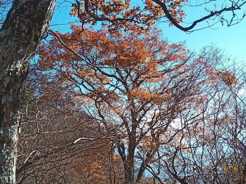 【その他】筑波山に行ってきました -2020.11.14-_b0002644_14413584.jpg