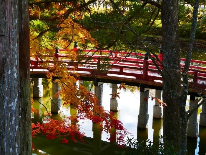 紅葉の高野山へ 7 壇上伽藍の蓮池 2020-11-24 00:000_b0093754_23314392.jpg