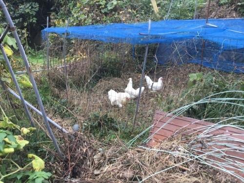 ニワトリの卵が食べたい_e0181260_19392610.jpeg