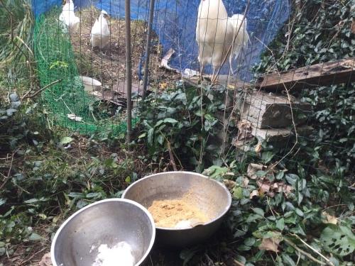 ニワトリの卵が食べたい_e0181260_19471085.jpeg