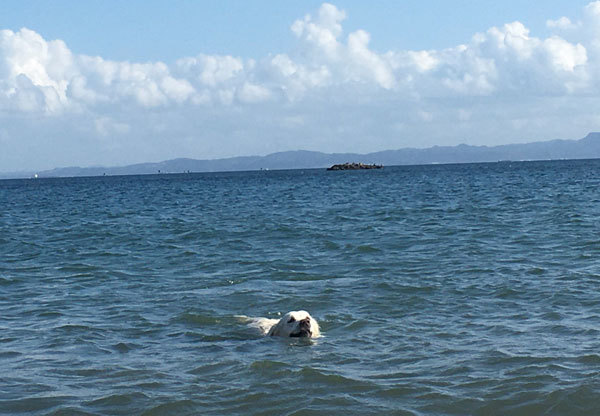 3時間泳ぎまくりまちた!_c0110361_11530566.jpg