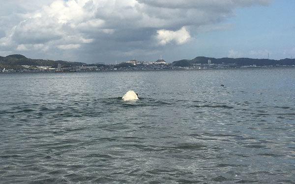 3時間泳ぎまくりまちた!_c0110361_11534690.jpg