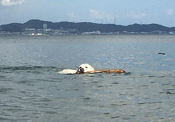3時間泳ぎまくりまちた!_c0110361_11540351.jpg