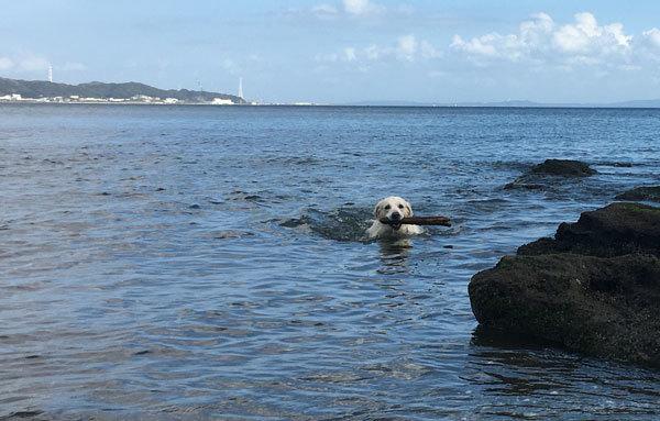 3時間泳ぎまくりまちた!_c0110361_11563997.jpg